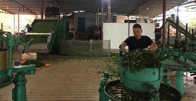 Hải Hà: Nâng cao chất lượng sản phẩm OCOP