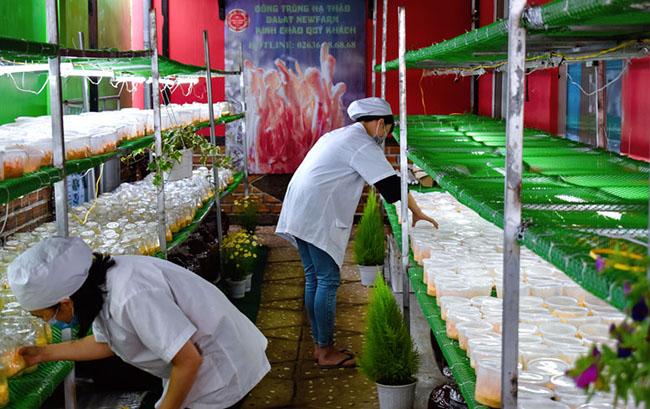 Khẳng định thế mạnh cây dược liệu Lâm Đồng