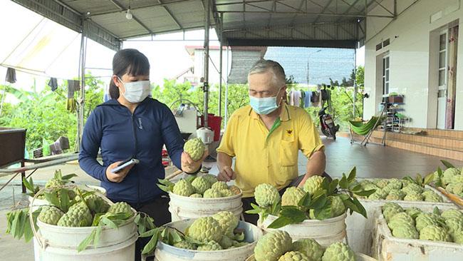 TX Đông Triều: Quan tâm tiêu thụ nông sản cho người dân
