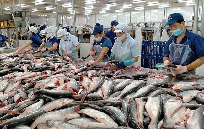 Bất chấp dịch bệnh, xuất khẩu thủy sản vẫn đạt 5 tỷ USD