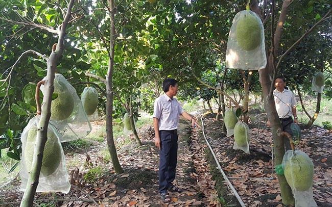 Thương mại điện tử thúc đẩy tiêu thụ nông sản