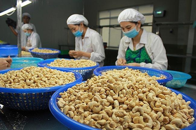 Việt Nam là thị trường xuất khẩu hạt điều lớn nhất của Campuchia