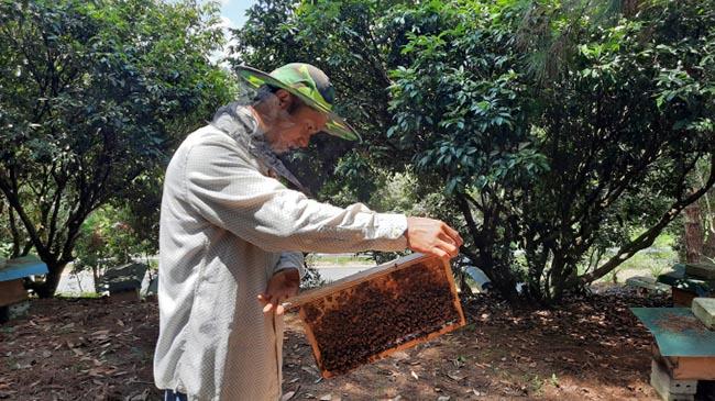 Hiệu quả nghề nuôi ong mật ở Tiên Yên