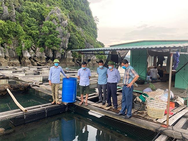 Hoạt động hỗ trợ tiêu thụ sản phẩm thủy sản tỉnh Quảng Ninh
