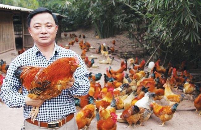 Gà Tiên Yên thành sản phẩm OCOP nổi tiếng