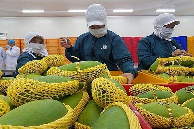 Xuất khẩu trái cây: Tạo mã số vùng trồng để đảm bảo chất lượng