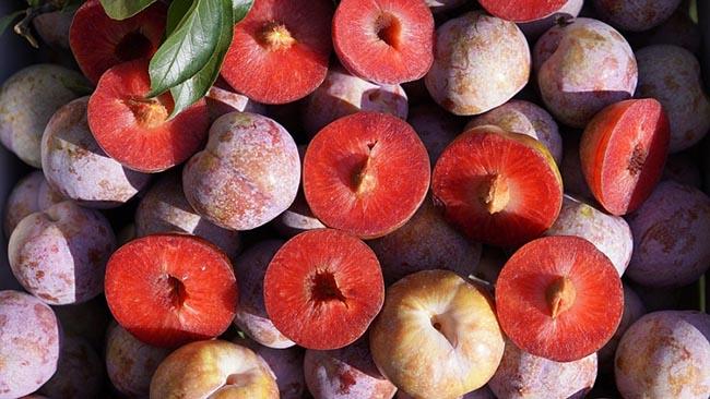 Sơn La: Mùa quả ngọt